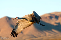 Sandhill in-flight