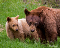 Cinamon Sow and Cub